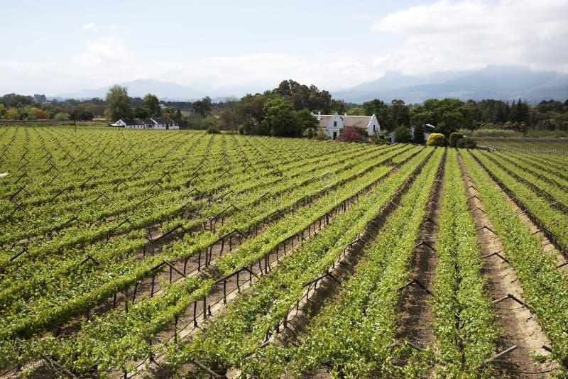 Vignes et montagnes chez Paarl en Afrique du Sud photos stock