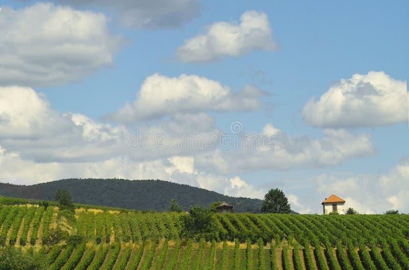 Vignes et nuages photographie stock libre de droits