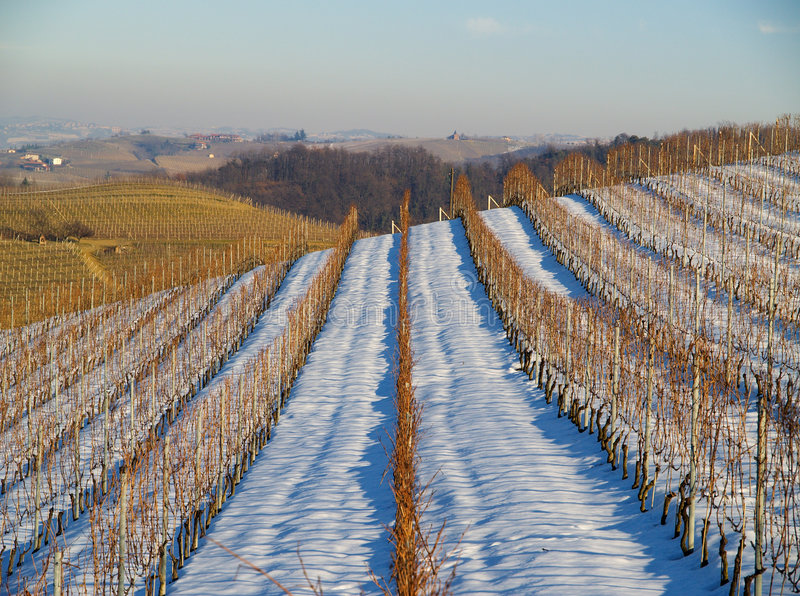 Vignes italiennes en hiver images libres de droits