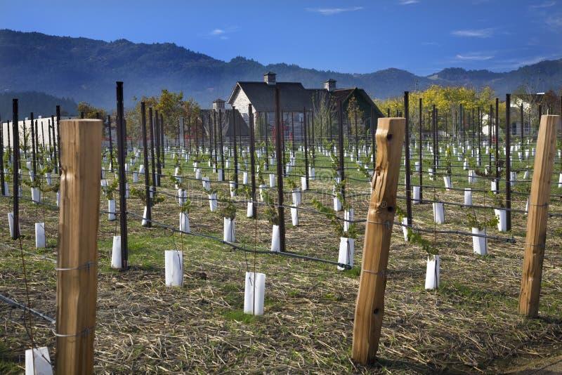 Vignes neuves Napa la Californie d'établissement vinicole image stock