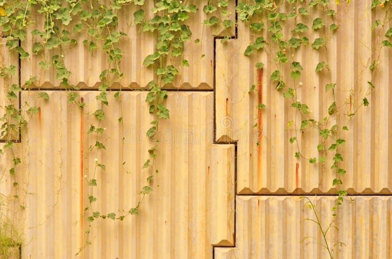 Vignes sauvages accrochantes photos libres de droits