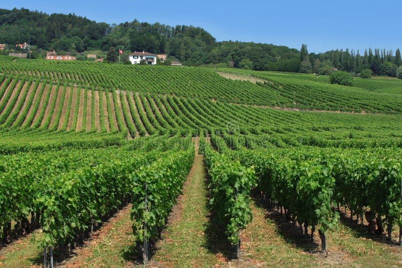 Vignes suisses images libres de droits