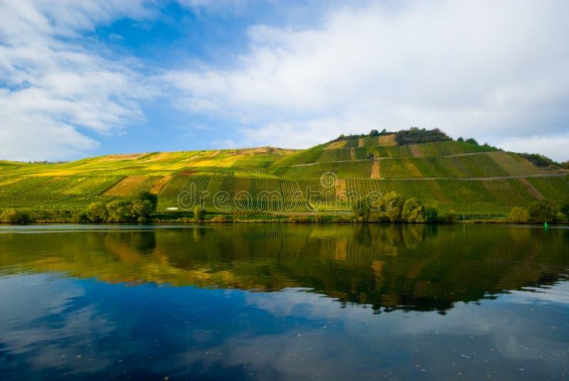 Vignes sur la Moselle photo stock
