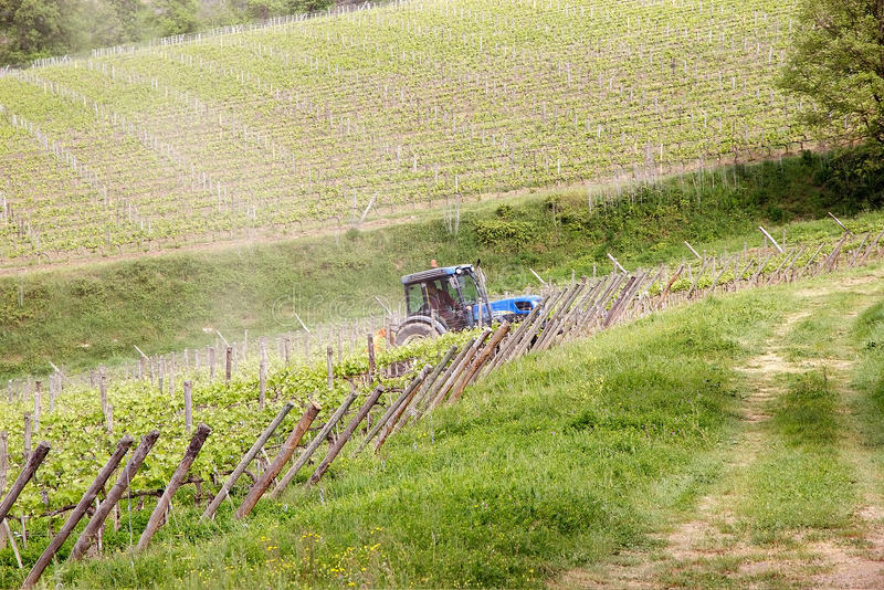 Vignes toscanes photos libres de droits