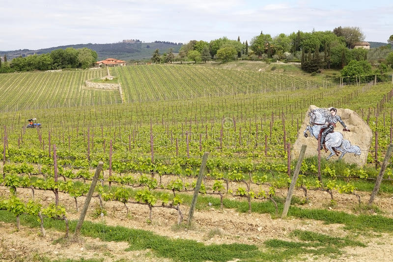 Vignes toscanes photographie stock