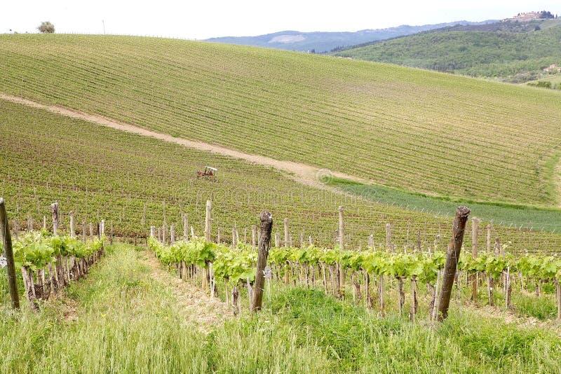 Vignes toscanes image libre de droits