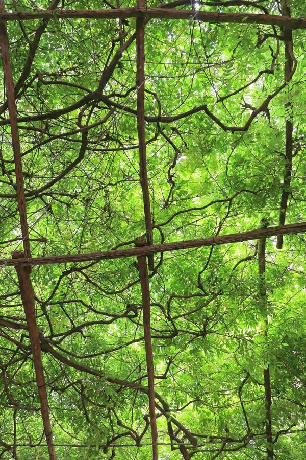 Vignes vertes aériennes image stock