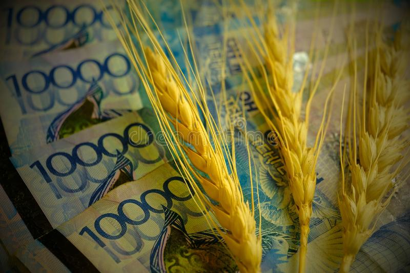Three spikelets of wheat are on the banknotes of Kazakhstan. Four ten-thousandth tenge banknotes. Concept: the price of grain,. Vignetting. Three spikelets of stock image