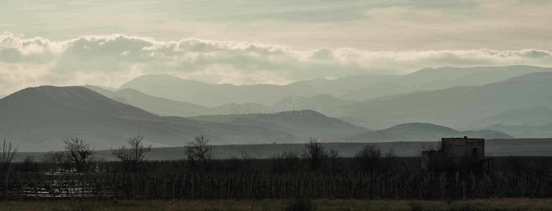 Vignoble à la nuance contre les montagnes et les nuages dans les rayons du coucher de soleil photo stock