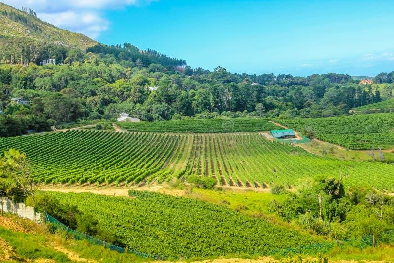 Vignoble Afrique du Sud photo stock