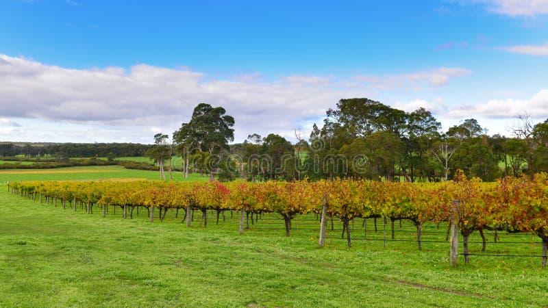 Vignoble chez Margaret River, Australie photographie stock libre de droits