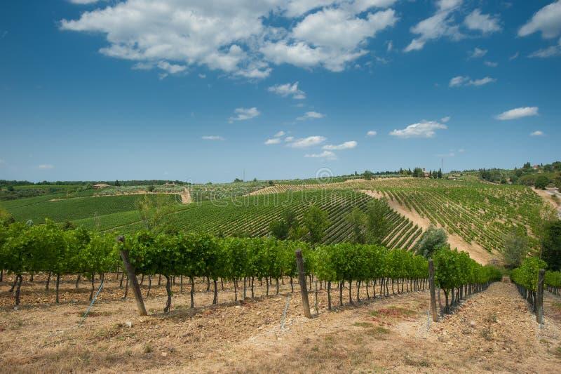 Vignoble dans Chianti, Toscane photo libre de droits