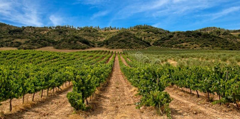 Vignoble dans La Rioja avec la montagne et le ciel bleu image stock