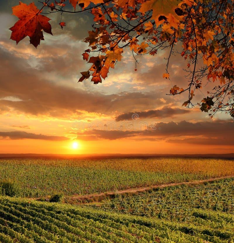 Vignoble dans le chianti, Toscane photos stock