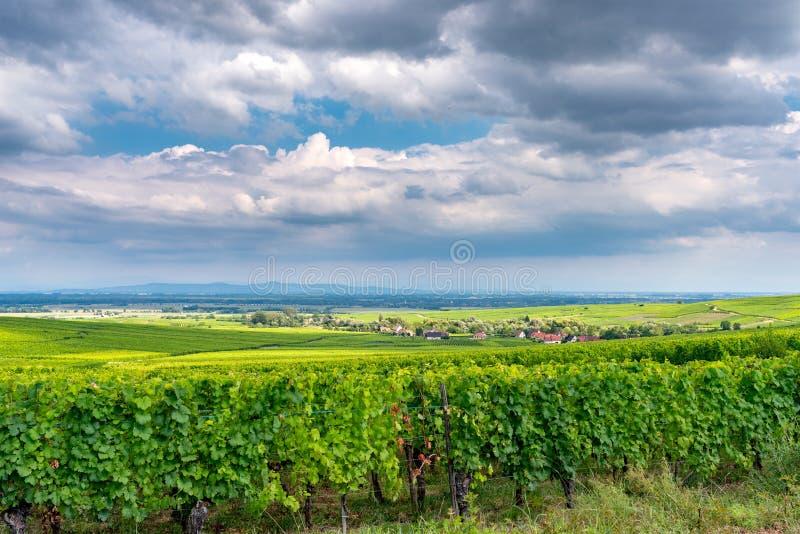 Vignoble dans le ribeauville, France photo stock