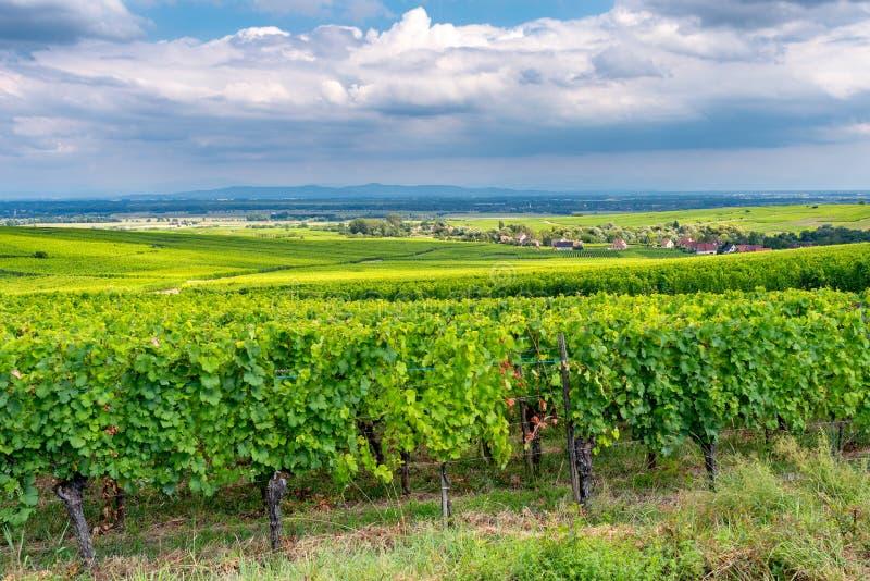 Vignoble dans le ribeauville, France image libre de droits