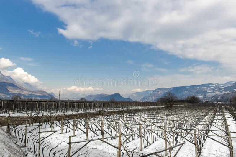 Vignoble dans le Tirol en hiver photo libre de droits