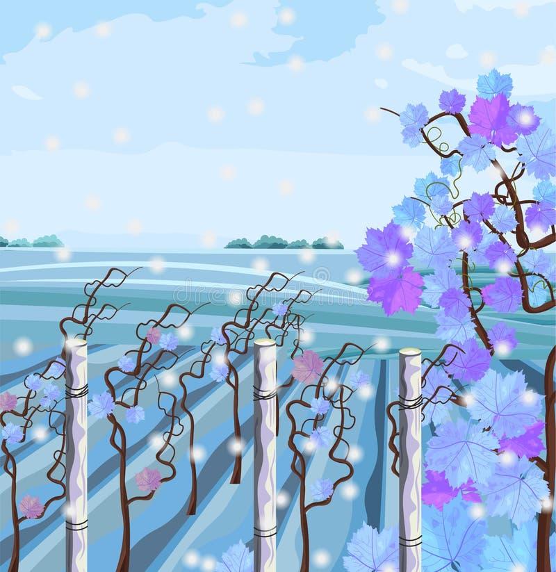 Vignoble dans le vecteur de saison d'hiver Beaux milieux de neige illustration libre de droits