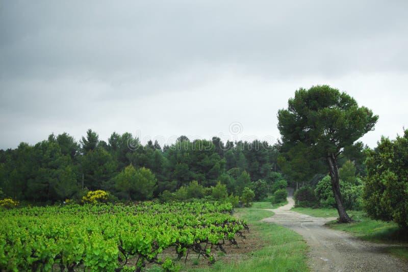 Vignoble dans les Frances photos stock