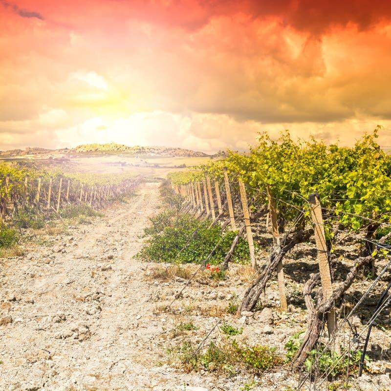 Vignoble dans les montagnes de la Sicile photos stock