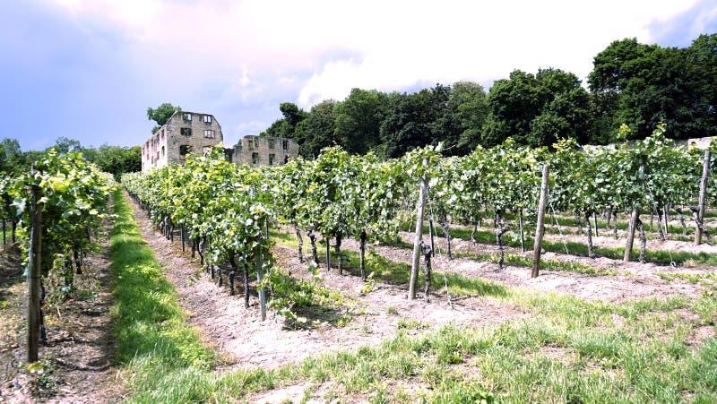Vignoble dans les ruines sous le ciel bleu photographie stock
