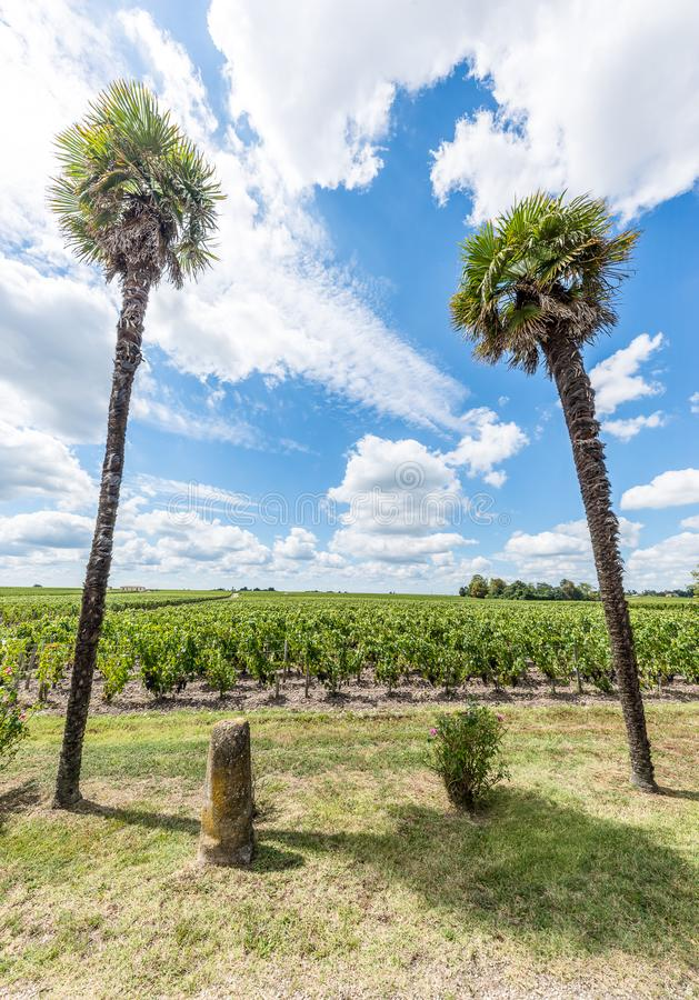 Vignoble dans Medoc près de Bordeaux dans les Frances photographie stock libre de droits