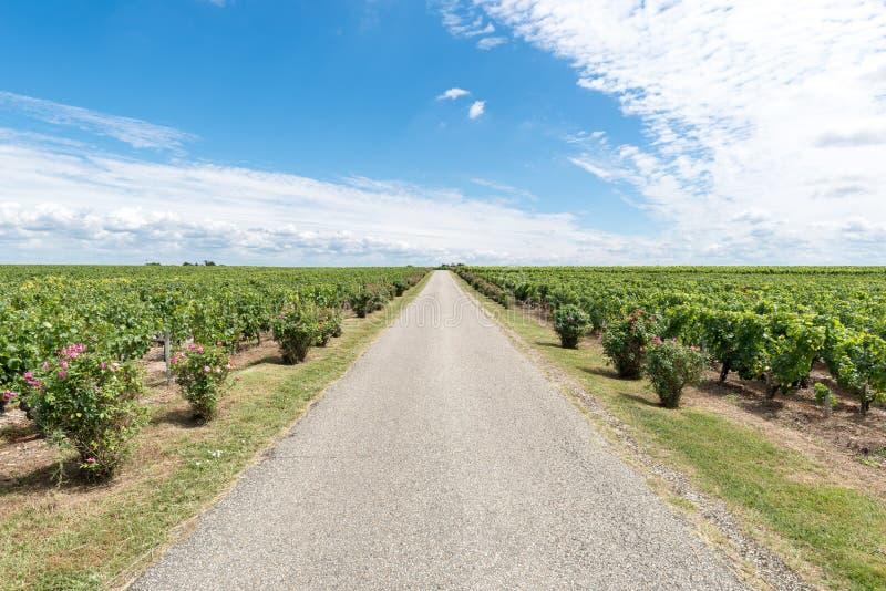Vignoble dans Medoc près de Bordeaux dans les Frances photos stock