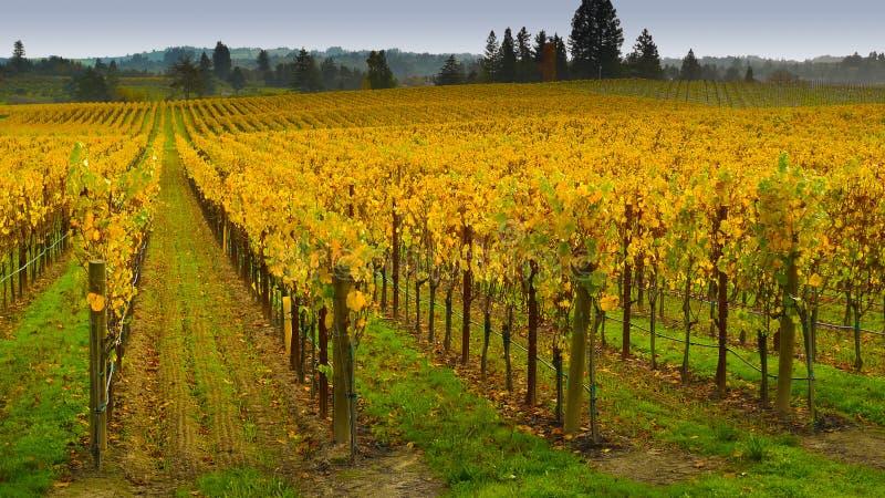 Vignoble dans Napa Valley photo stock