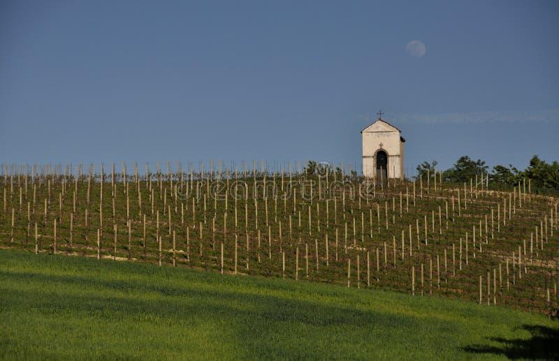 Vignoble dans Piémont en Italie photographie stock