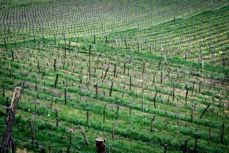 Vignoble dans Radebeul images libres de droits