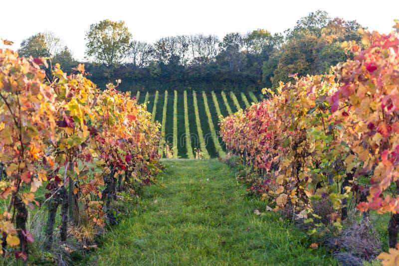 Vignoble de Denbies, Dorking, Surrey, Angleterre, R-U photo stock