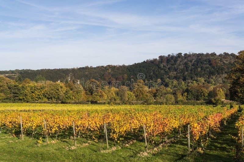Vignoble de Denbies, Dorking, Surrey, Angleterre, R-U photographie stock libre de droits