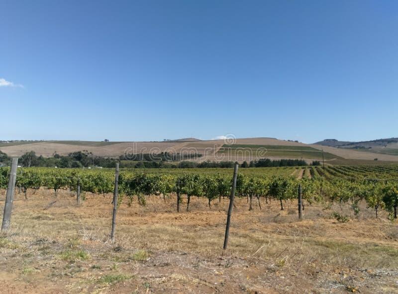 Vignoble de ferme de vin photo stock