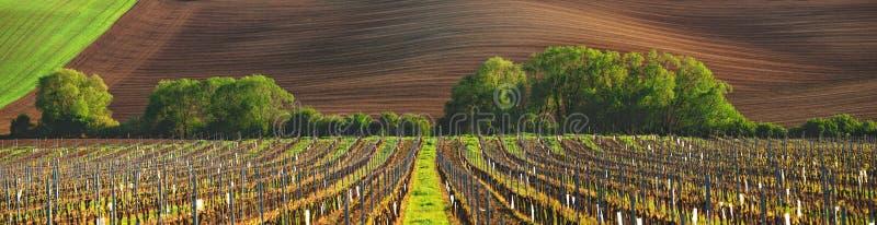 Vignoble de Frances photo stock