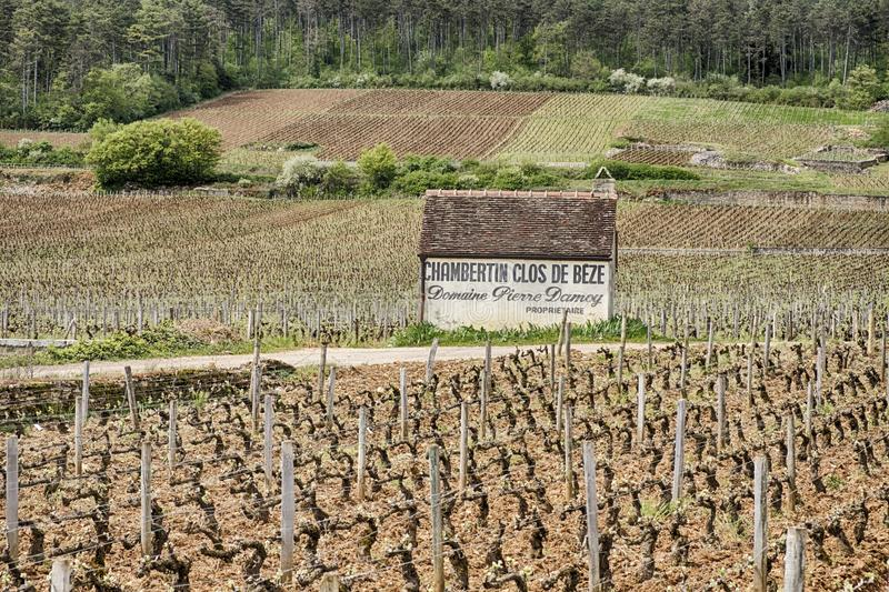 Vignoble de grand cru de Clos de Beze photographie stock libre de droits