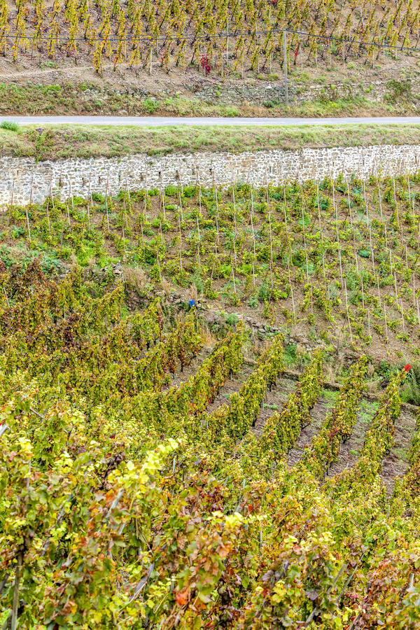 Vignoble de grand cru de cote rotie image libre de droits