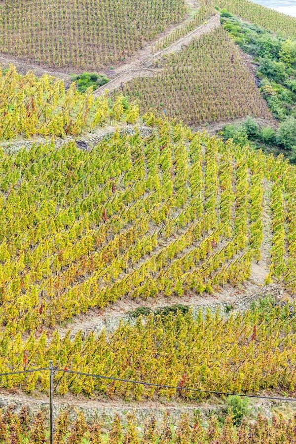 Vignoble de grand cru de cote rotie photographie stock