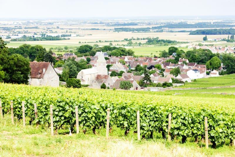 vignoble de grand cru près de Fixin, Cote de Nuits, Bourgogne, France images libres de droits