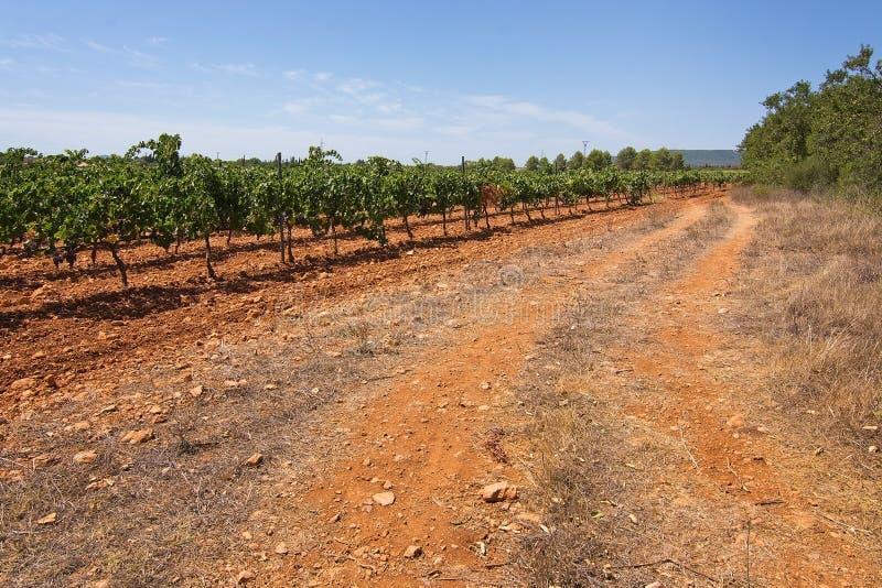 Vignoble de Majorque images stock