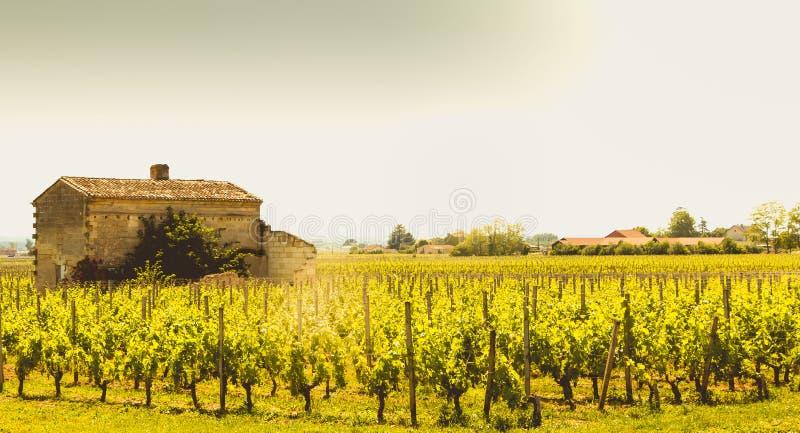 Vignoble de Saint Emilion, France, près de Bordeaux à la fin de s photos libres de droits
