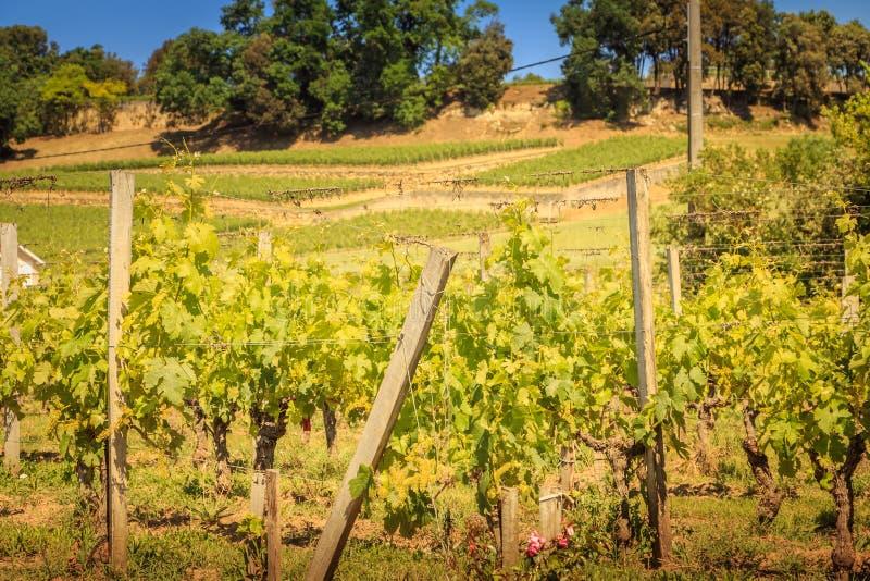 Vignoble de Saint Emilion, France, près de Bordeaux à la fin de s image stock