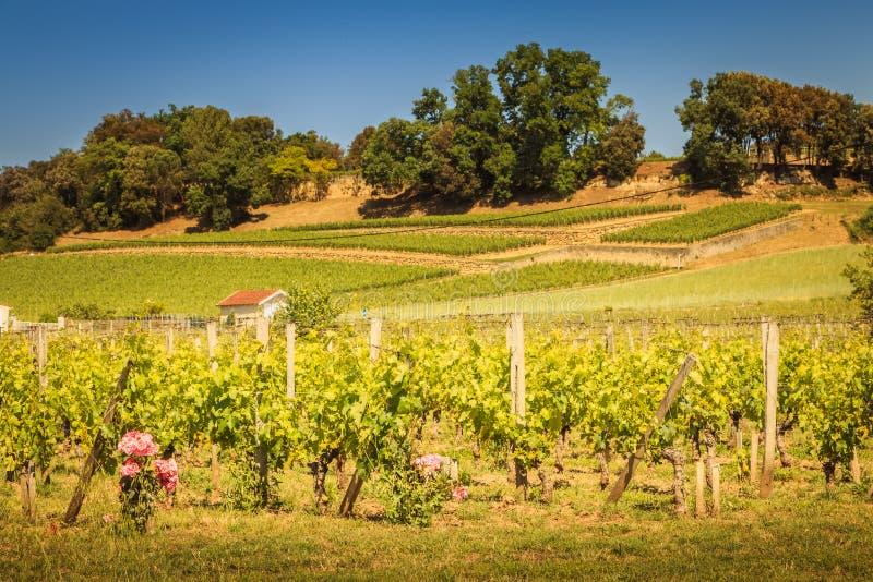 Vignoble de Saint Emilion, France, près de Bordeaux à la fin de s image libre de droits