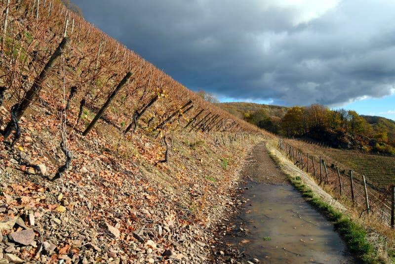Vignoble de Thann en automne image stock
