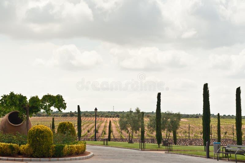 Vignoble des vignes d'un établissement vinicole du sud-est en Espagne photos libres de droits