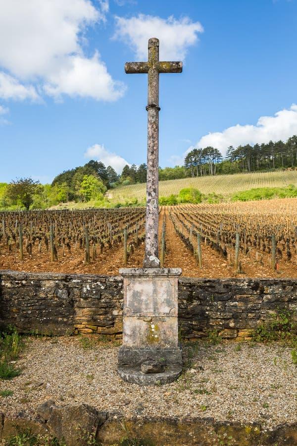 Vignoble en Bourgogne, France, avec une croix en pierre sur le son bord photo stock