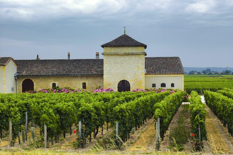 Vignoble en Gironde (Bordeaux, l'Aquitaine) photos stock