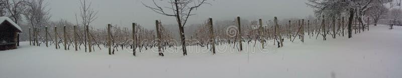 Vignoble en hiver photographie stock