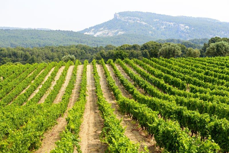 Vignoble en Provence image libre de droits