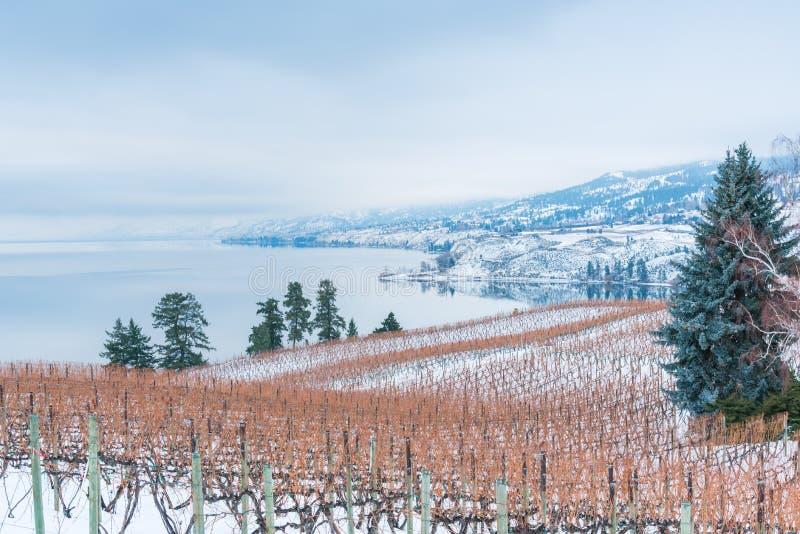 Vignoble et montagnes couverts dans la neige de lac dans la distance images libres de droits
