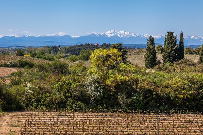 Vignoble et Pyrénées photos libres de droits